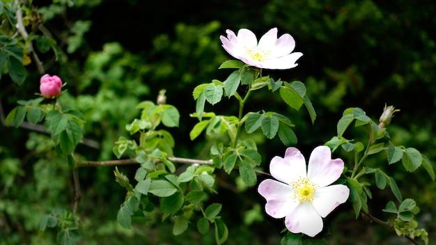 Gros Plan Du Chien Glauque Rose Dans Un Jardin Photo gratuit