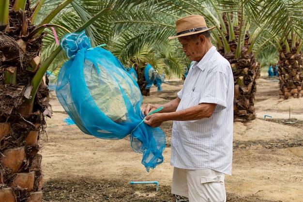 Gros plan du jardinier en prenant soin de la plantation de dattiers Photo Premium