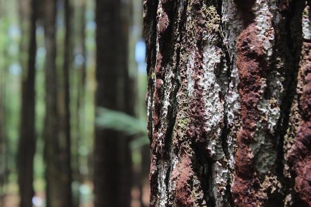 Gros plan du tronc d'arbre Photo Premium