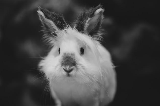 Gros Plan De L'échelle De Gris D'un Lapin Blanc Sur Dark Photo gratuit