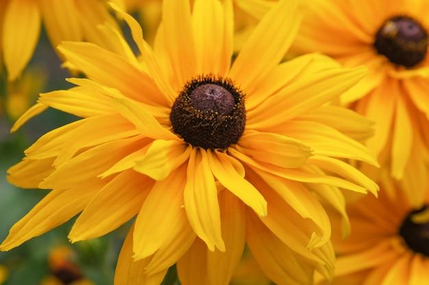 Gros plan l'été jaune fleurs Photo Premium