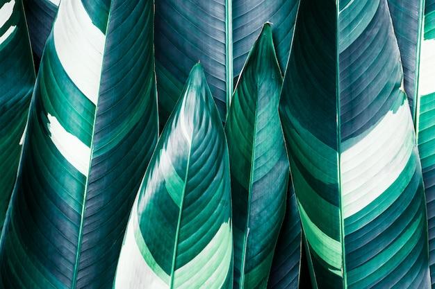 Gros plan exotiques feuilles Photo Premium
