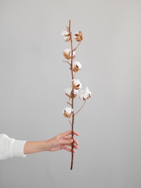 Gros Plan, Femme, Branche, Coton, Fleurs Photo gratuit
