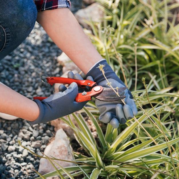Gros plan, femme, jardinier, taille, plantes, jardin Photo gratuit