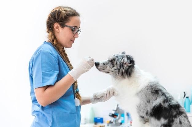 Gros plan, femme, vétérinaire, alimentation, chien, clinique Photo gratuit
