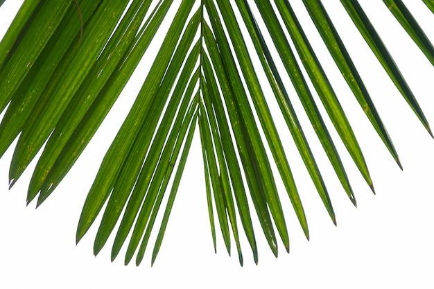 Gros plan de feuilles de palmier à fond de nuages blancs. Photo Premium