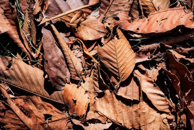 Gros plan de feuilles séchées en automne Photo gratuit