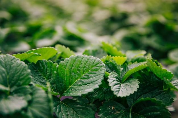 Gros plan, de, feuilles vertes, plante Photo gratuit