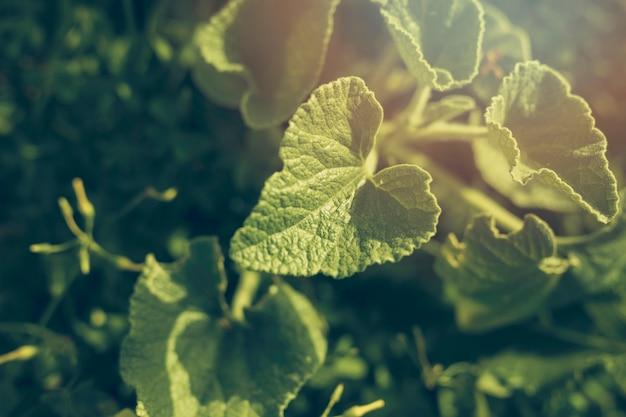 Gros plan, feuilles vertes Photo gratuit