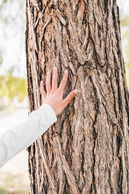 Gros plan, fille, main, toucher, écorce arbre Photo gratuit