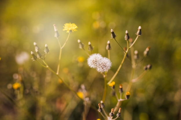 Gros plan, de, fleur blanche, à, bourgeon, à, lumière soleil Photo gratuit