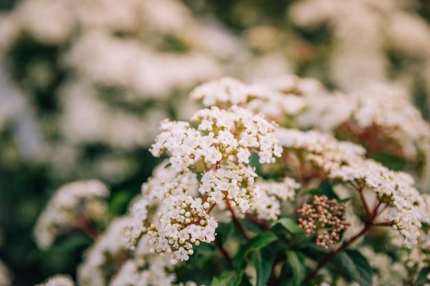 Gros plan, fleur blanche, printemps Photo gratuit