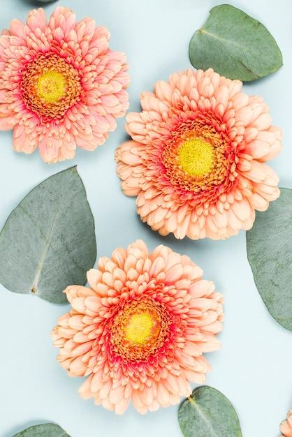 Gros plan, de, fleur gerbera, et, forme coeur, feuilles, sur, toile de fond bleu Photo gratuit
