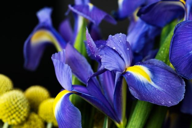 Gros plan d'une fleur d'iris Photo gratuit