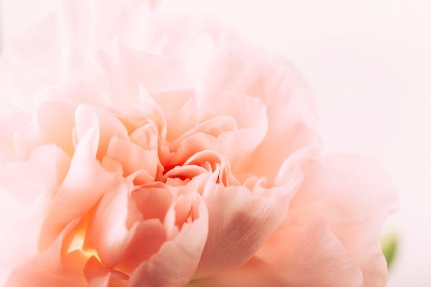 Gros plan, de, a, fleur, tête Photo gratuit