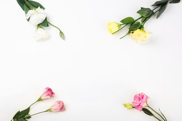 Gros plan, fleurs, coin, fond Photo gratuit