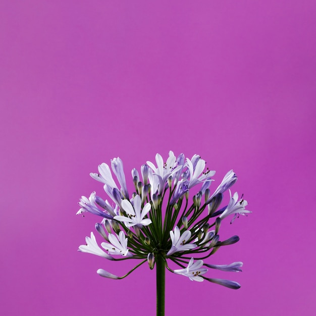 Gros Plan De Fleurs Violettes Photo gratuit