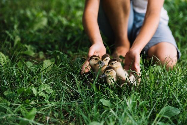 Gros plan, de, garçon, jouer, à, canetons, sur, herbe verte Photo gratuit