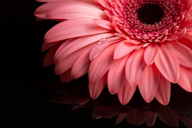 Gros plan, de, gerbera, pétales, dans, nuances roses Photo gratuit