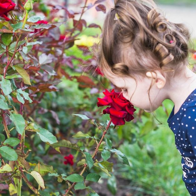 Gros plan, girl, sentir, beau, rose rouge Photo gratuit