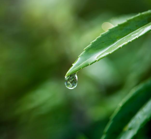 Gros plan de goutte d'eau sur les feuilles Photo gratuit