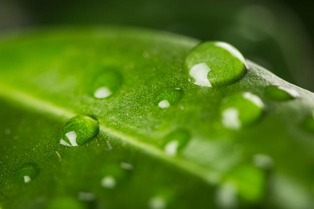 Gros plan de gouttes d'eau sur les feuilles Photo gratuit