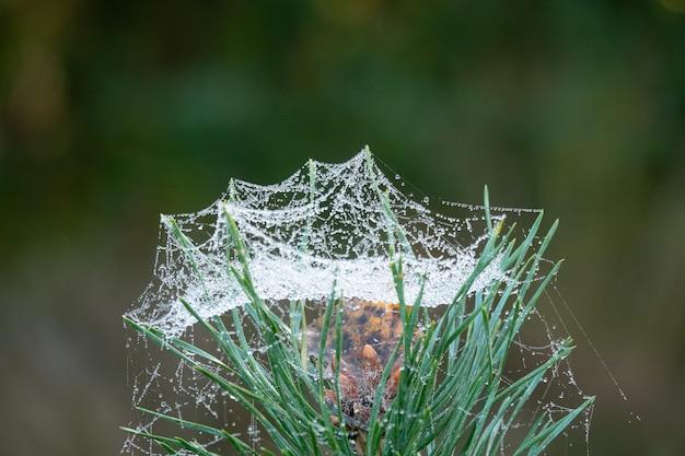Gros Plan D'herbe Verte Recouverte De Toile D'araignée Humide Photo gratuit