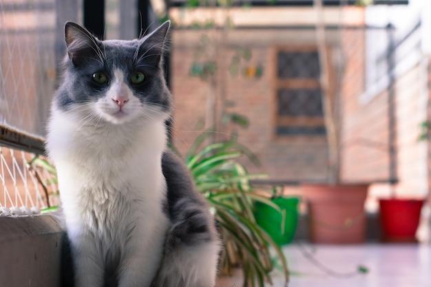 Gros Plan D'un Joli Chat Noir Et Blanc Assis Près De La Fenêtre Avec Un Arrière-plan Flou Photo gratuit