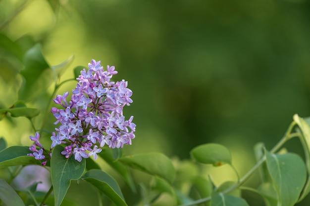Gros Plan D'une Jolie Fleur Sur Un Arrière-plan Flou Photo gratuit