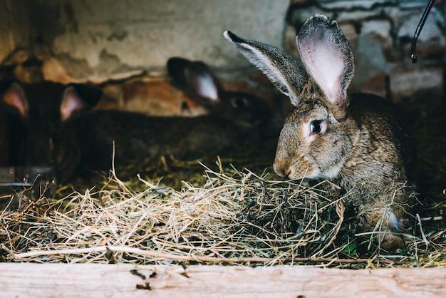 Gros plan, lapin, manger, herbe Photo gratuit