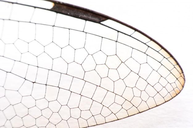 Gros plan macro libellule ailes sur blanc Photo Premium