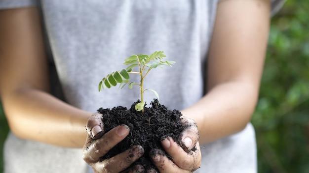 Gros plan, main femme, planter, jeune arbre Photo Premium