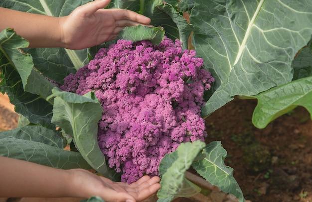 Gros plan, main, paysan, jardin, pendant, heure matin Photo gratuit