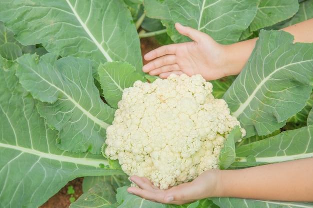 Gros plan, main, paysan, jardin, pendant, matin, temps, nourriture, fond Photo gratuit
