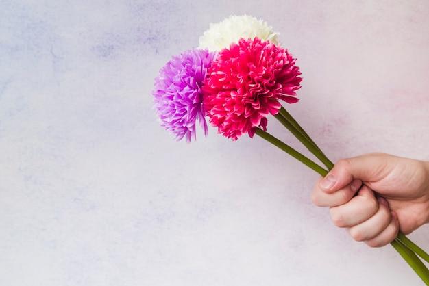 Ballade de la reine des fleurs - Jean Richepin Gros-plan-main-tenue-colore-faux-chrysantheme-fleurs-main_23-2147925578