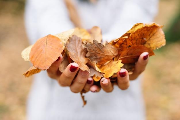Gros Plan, Mains De Femme Tenant Des Feuilles De Couleur Orange Dans Le Parc En Saison D'automne. Photo Premium
