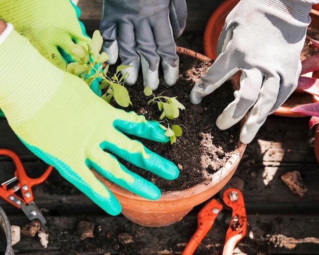 Gros plan, mains jardinier, planter, les, plantes, dans, pot Photo gratuit