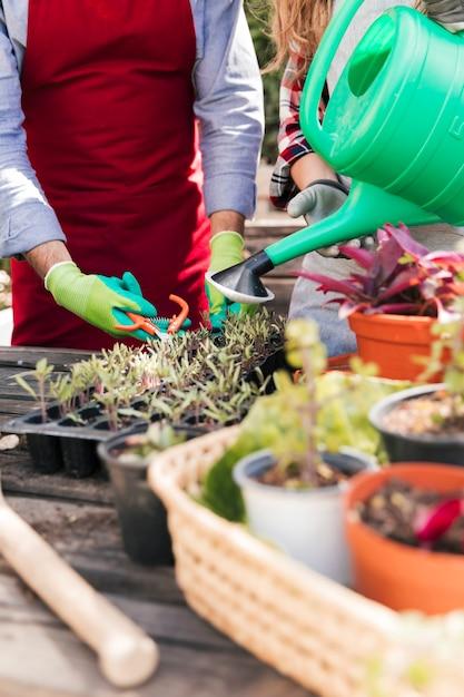 Gros plan, mâle, femme, jardinier, coupe, arrosage, plante, jardin domestique Photo gratuit
