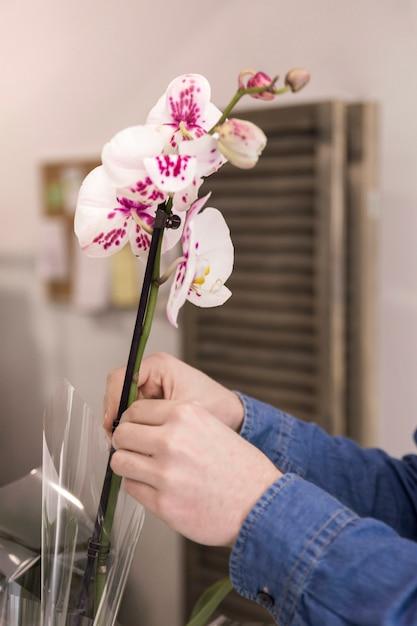Gros plan, mâle, main, fleuriste, placer, beau, blanc, orchidée, dans, vase Photo gratuit