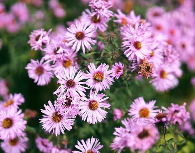 Gros Plan De Mise Au Point Sélective De Fleurs Roses Avec Une Abeille Sur Le Dessus Et De Verdure Photo gratuit