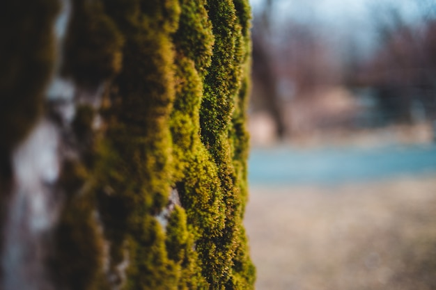 Gros Plan De Mousse Verte Photo gratuit