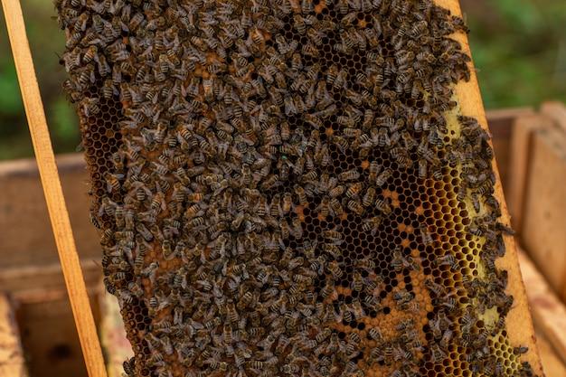 Gros plan d'un nid d'abeilles plein d'abeilles Photo Premium