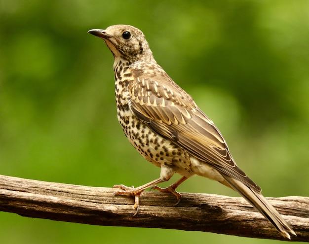 Gros Plan D'un Oiseau Moineau Mignon Photo gratuit