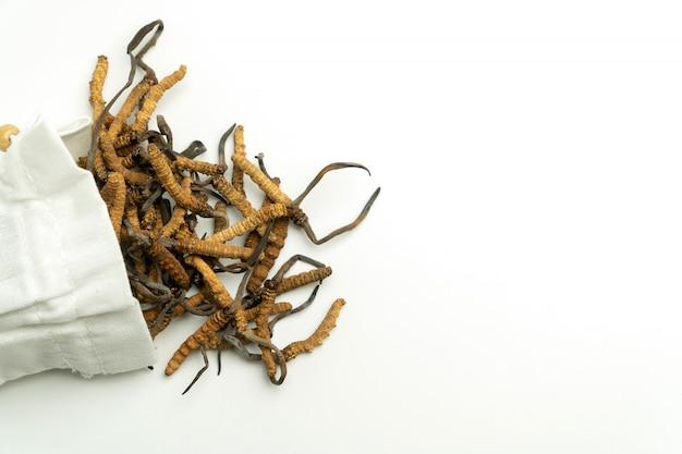 Gros plan d'ophiocordyceps sinensis ou de cordyceps aux champignons Photo Premium