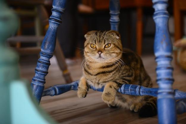 Gros Plan Petit Chat Sur Le Sol Dans Un Café Animal Photo Premium