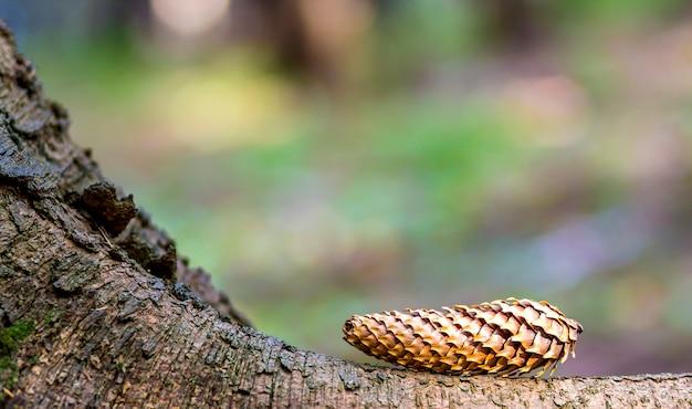 Gros plan, de, pin arbre, à, coloré, arrière-plan flou Photo Premium