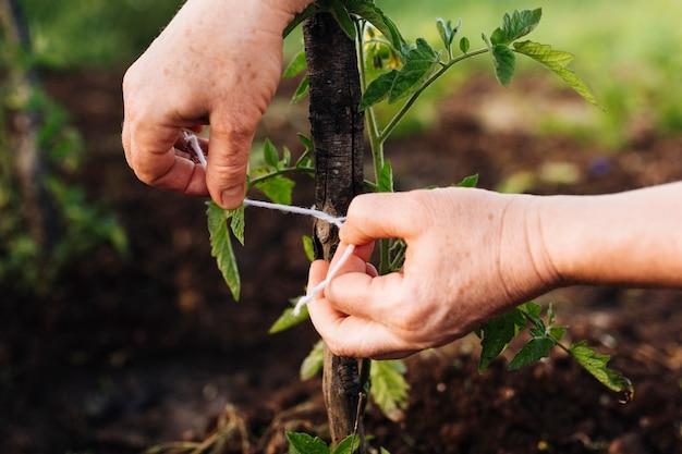Gros plan, piquetage, plante Photo gratuit