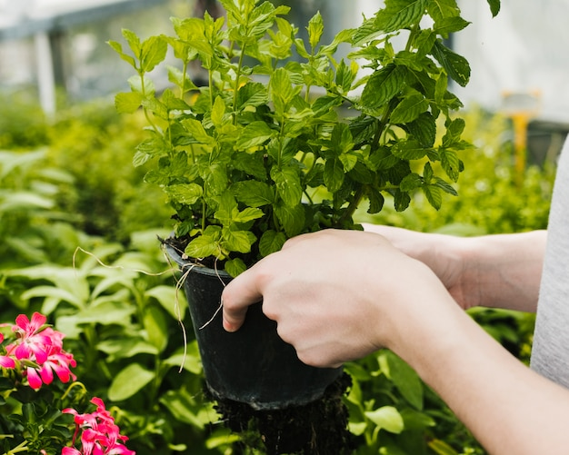 Gros plan, plante, être, tenu Photo gratuit