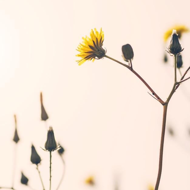 Gros plan d'une plante à fleurs jaune Photo gratuit