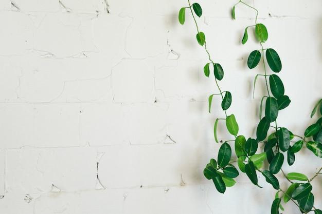 Gros plan d'une plante d'intérieur vert sur un mur blanc, décoration d'intérieur Photo Premium
